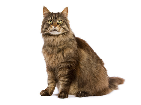 cat-breed-landing-hero